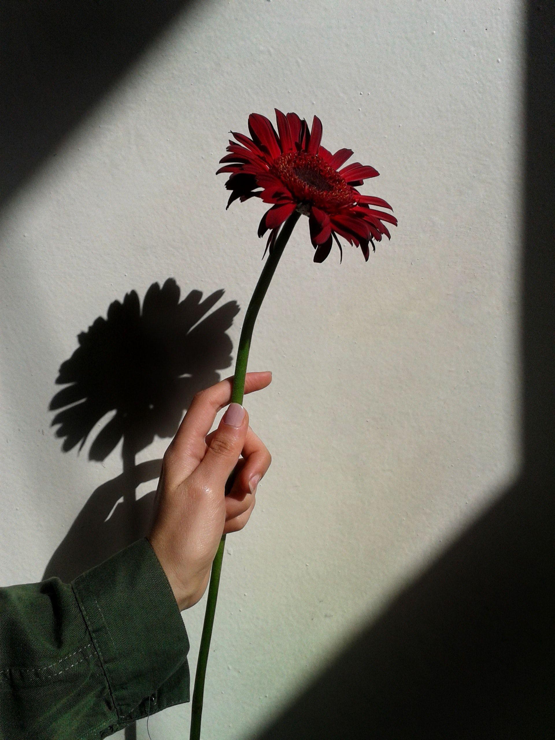 sombra_poesía
